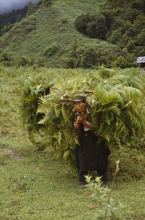 22b 1995 Monpa Woman Carrying Ferns